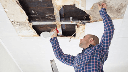 Compliance Guide to Addressing Mold at Work